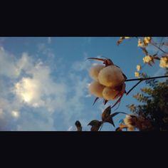 Cotton Sky (El Salvador)