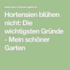 Hortensien blühen nicht: Die wichtigsten Gründe - Mein schöner Garten