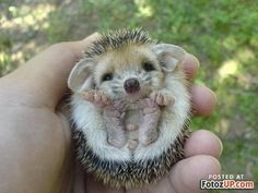Google Image Result for http://fotozup.com/wp-content/uploads/2009/08/cute-animals-01-400x300.jpg