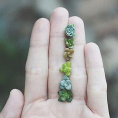Now THIS helps. Ive just taken the pieces off when they grew roots. I need to save and share my succulents! How to propagate succulents