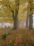 autumn leaves + fog + cemetery = perfect