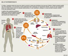Sel et hypertension