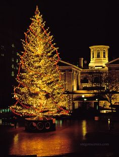 Portland's version of Rockefeller Center in NY.  Christmas Tree at Pioneer Square, Portland, OR-  We do this EVERY year <3