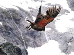 Parrot - lovely photo