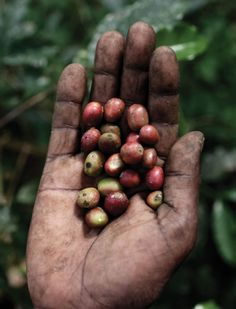 Coffee and culture in Ethiopia. Story by Majka Burhardt Photos by Per-Anders Pettersson