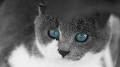 Super cute cats slideshow! Great slideshow for your kids! Check it out! Also, check out whole Super Cute Animals series!