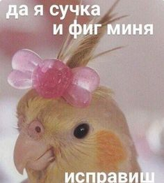 Funny Animal Memes, Funny Relatable Memes, Funny Animals, Cute Animals, Reaction Pictures, Funny Pictures, Hello Memes, Russian Memes, Fun Live