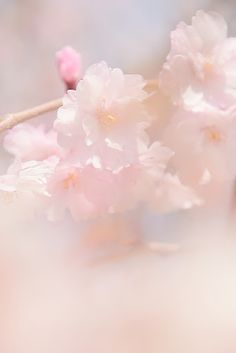 #pink #pastel #floral #bokeh #photography