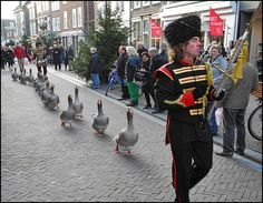 Middelburg, a town in the province of Zeeland in the Netherlands.  A maitre tambour, a drummer and a dozen pedigree toulouser geese are the superbe ingrediënts of this magnificent act: a geese parade!