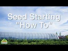 How to Start Seeds with Noah of Bright Agrotech - YouTube