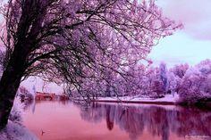 cherry pau фото