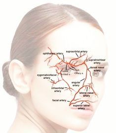 In reality, medical lasers have been used to get rid of dark areas, acne scars, other types of skin acnes and even tattoos. Cosmetic Fillers, Botox Fillers, Dermal Fillers, Relleno Facial, Facial Anatomy, Botox Cosmetic, Facial Aesthetics, Medical Anatomy, Facial Muscles
