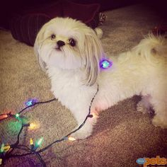 The Cutest Pets on Twitter This Week! - HIT THE LIGHTS - Twitter Pics : People.com