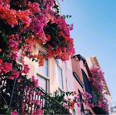 Bougainvillea and colourful houses! Let's travel the world. Pretty In Pink, Beautiful Flowers, Beautiful Places, Exotic Flowers, Purple Flowers, Colorful Flowers, No Rain, Pretty Pictures, Planting Flowers