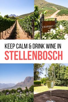 My favorite motto in life is 'keep calm drink wine'. I recommend my favorite Winelands vineyards for wine tasting in Stellenbosch, South Africa. Where to drink wine in the Winelands Hawaii Travel, Japan Travel, Wine Tourism, Beautiful Places To Travel, Africa Travel, Adventure Is Out There, Wine Drinks, Wine Country, Wine Tasting