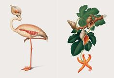 Full of extraordinary creatures, the illustrated series The Creative Specimens seamlessly combines species into unusual hybrids. Similar in color, each organism is bizarre in form. The feathered head of a bird is placed on a tortoise's body, octopus tentacles sprout from the bottom of a cactus, and speckled coral comprises a deer's antlers. Colossal Art, Illustrations, Vintage Fashion, Vintage Style, Insects, Contemporary Art, Creatures, Graphic Design, Drawings