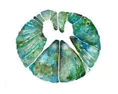 Si tratta di un insieme di tre stampe seguenti: Sezione del midollo spinale cervicale in verde Sezione del midollo spinale toracico in verde Midollo spinale lombare sezione trasversale in verde  Comprando allingrosso riceverai uno sconto del 15%! Urrà! Si noti che questi verrà stampati in un orientamento verticale, come nella foto. Se desideri un orientamento diverso, o eventuali ritocchi di colore, non esitate a farmi sapere. Grazie!  Nome: midollo spinale trasversale sezione Set di 3…