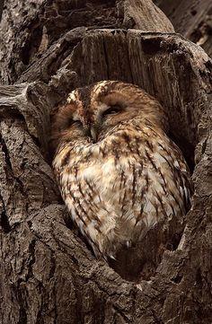 Time to sleep    animals     sleeping animals     wild life   #nature #wildlife  https://biopop.com