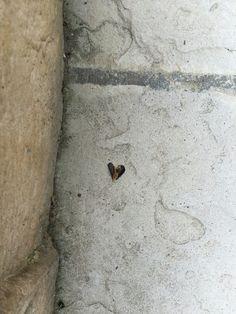 Dead bug shaped like a heart.