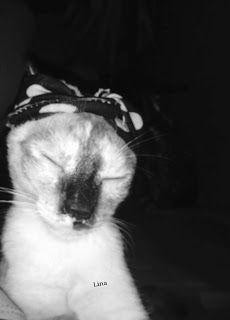 Sem Titulo: scarf hair Im making scarf hair my female cat. Cute Its Pérola.😍