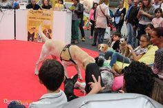 Mondo pet, torna Quattro Zampe in Fiera. Prima tappa a Padova :http://www.qualazampa.news/2016/04/04/mondo-pet-torna-quattro-zampe-in-fiera-prima-tappa-a-padova/