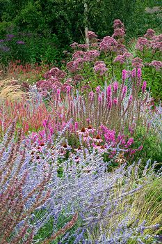 Perennial border with Perovskia Blue Spire, Echinacea Rubinstern, Lythrum Fire Candle and Eupatorium purpureum - Lady Farm, Somerset