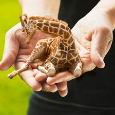 Wouldn't it be great if mini giraffes were real?  If you could have any animal in miniature what would it be? An elephant perhaps?