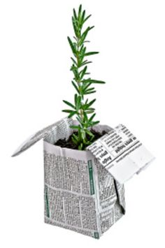 Origami pots- seedlings or rooted cuttings in recycled newspaper or grocery bag pots; add a little rafia ribbon and a care tag and it would make a cute wedding/party favor.