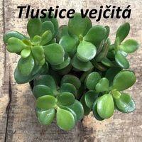 Flower Pots, Flowers, Workout Programs, Herbalism, Detox, Herbs, Fruit, Vegetables, Health