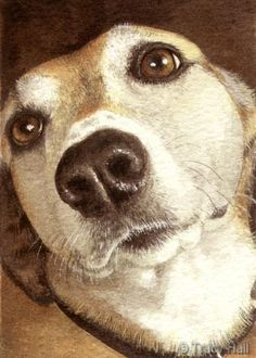 Dog pet portrait in watercolour by Tracy Hall