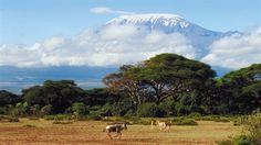 Kilimanjaro Trekking Tours - G Adventures Places Around The World, Around The Worlds, Places To Travel, Places To Visit, Travel Destinations, Kilimanjaro Climb, G Adventures, African Safari, Africa Travel