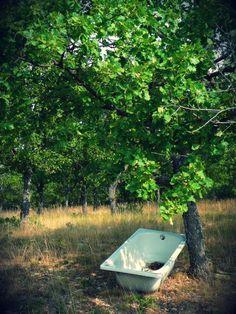Baignoire au pied d'un arbre