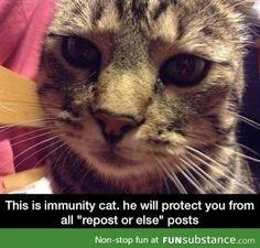 Immunity Cat take that repost or else