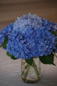 Blue hydrangea centerpieces available @ Flyboy Naturals  www.flyboynaturals.com