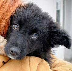 Adoptions of dogs. Shelter Dog Animal Rescue Foundation for the Homeless EMIR