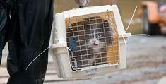 Keep your pets safe during disaster or emergency