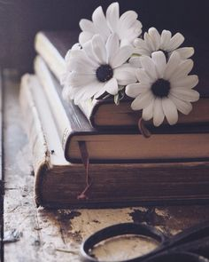 Image in Random stuff 🔱 collection by veera ♕ Book Wallpaper, Flower Wallpaper, Wallpaper Backgrounds, Still Life Photography, Book Photography, Creative Photography, Beautiful Flowers Wallpapers, Pretty Wallpapers, Photos Amoureux