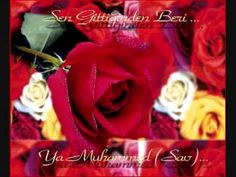 Ne kadar da çok sevmişiz seni,  Medine Gül'ü, Muhammed Nebi,  Sen bu ümmetin solmayan Gül'ü,  Medine Gül'ü, Muhammed Nebi.    Medine Gül'ü, Medine Gül'ü,  Ümmetin solmayan Gül'ü,  Salat, selam olsun Sana,  Ey Peygamber, Ey Yüce Resul.    ***    Yusuf güzelliğini senden almıştı,  Medine Gül'ü, Muhammed Nebi,  Sen'den daha güzel, üstünü yoktur,  Medine Gül'ü, Mu...
