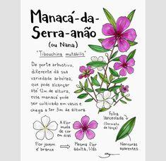 Botanical Prints, Botanical Gardens, Indoor Garden, Garden Plants, Herbal Witch, Large Indoor Plants, Garden Journal, Natural Garden, Cactus Y Suculentas
