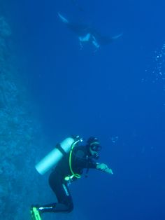 Diver meets manta ray at Daedalus Reef - Red Sea