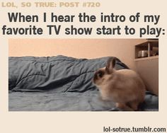 When I hear the Intro of my Favorite TV Show start to Play: run like mad to the couch, suddenly comfy