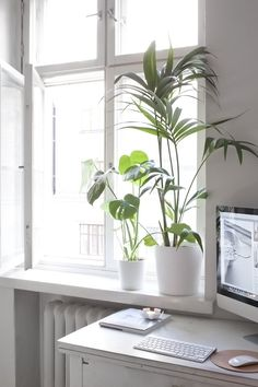 white + window + natural light + plants | home office
