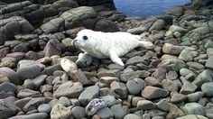 First chance to see seal pups up close | Tyne Tees - ITV News