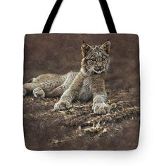 Young Bobcat By Alan M Hunt Tote Bag by Alan M Hunt Caracal, Serval, British Wildlife, Wildlife Art, Weekender Tote, Tote Bag, Rusty Spotted Cat, Iberian Lynx, Black Footed Cat