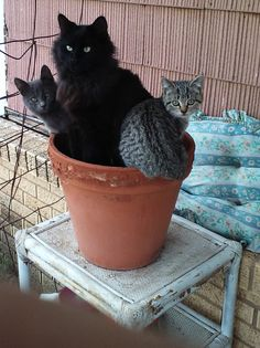 I only planted one kitty seed but3 popped up.