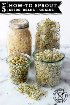 How-to Sprout: Seeds, Beans   Grains