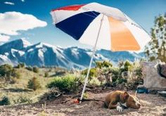Summer Tips for Dog Owners: Keeping Your Dog Safe in Hot Weather - Mishi Pets Dog Cooling Mat, Mammoth Lakes, Love Dogs, Brown Dog, New Puppy, Training Your Dog, Training Tips, Peta, Dog Walking