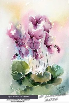 cyclamen III 2016 / Watercolour 23x31cm on Arches GT © janinaB. 2016