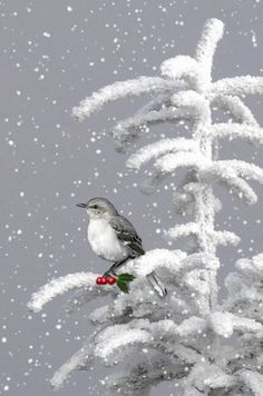 Little feathered friend in the snow... (Click on GIF) (Christmas, birds).... WINTER SNOW GIF