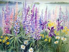 Lupine in watetcolor